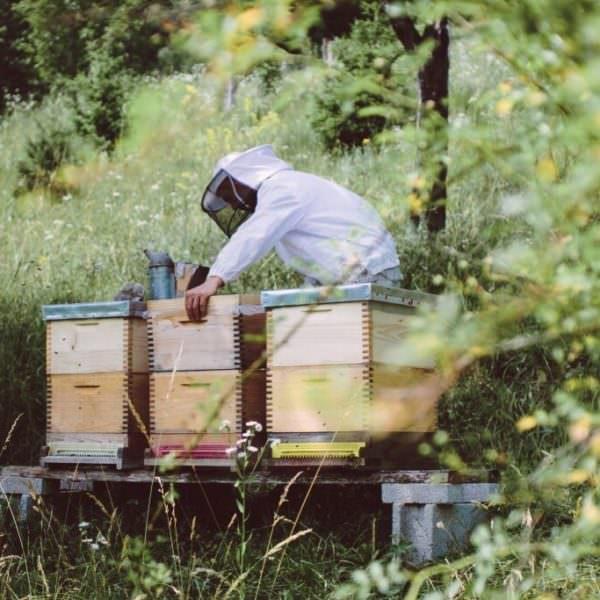Mein-Honig